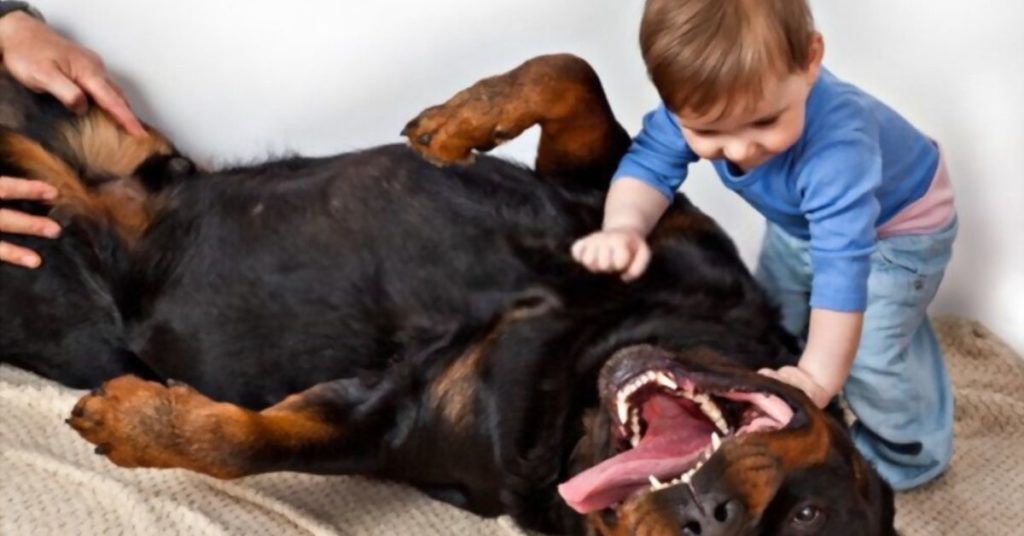 Rottweilers Good with Kids (1)