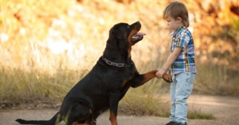 Rottweilers Good with Kids